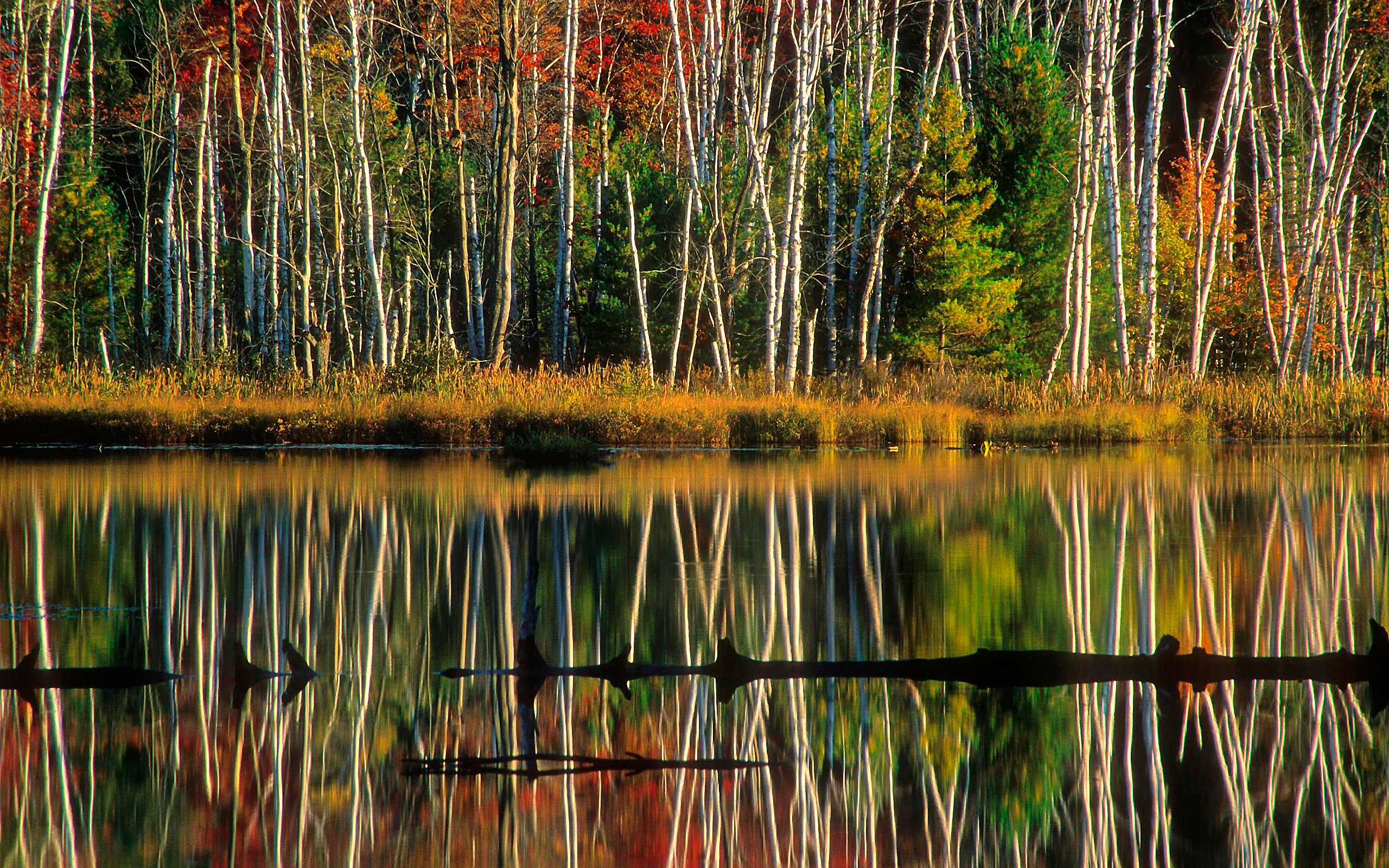 Birch reflections, council lake, hiawatha national forest, alger