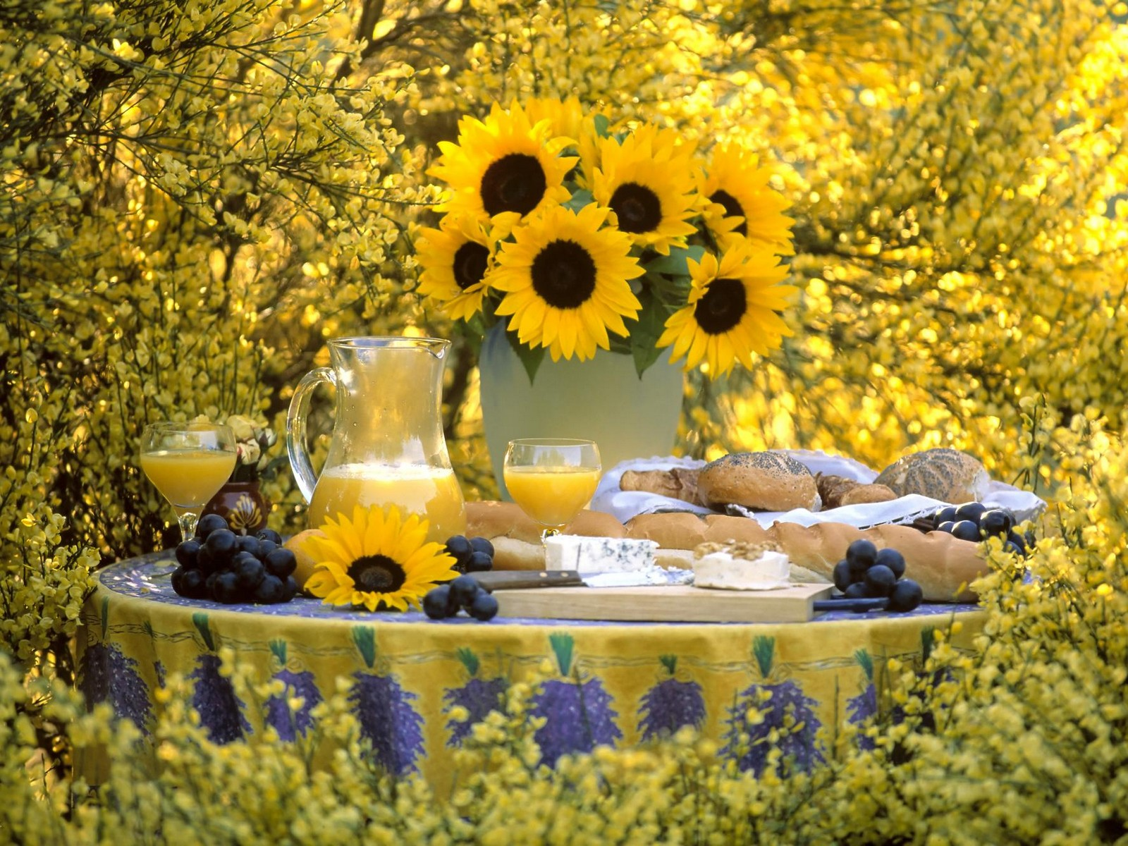 Summer Picnic Wallpapers, Photos, Pictures and Backgrounds