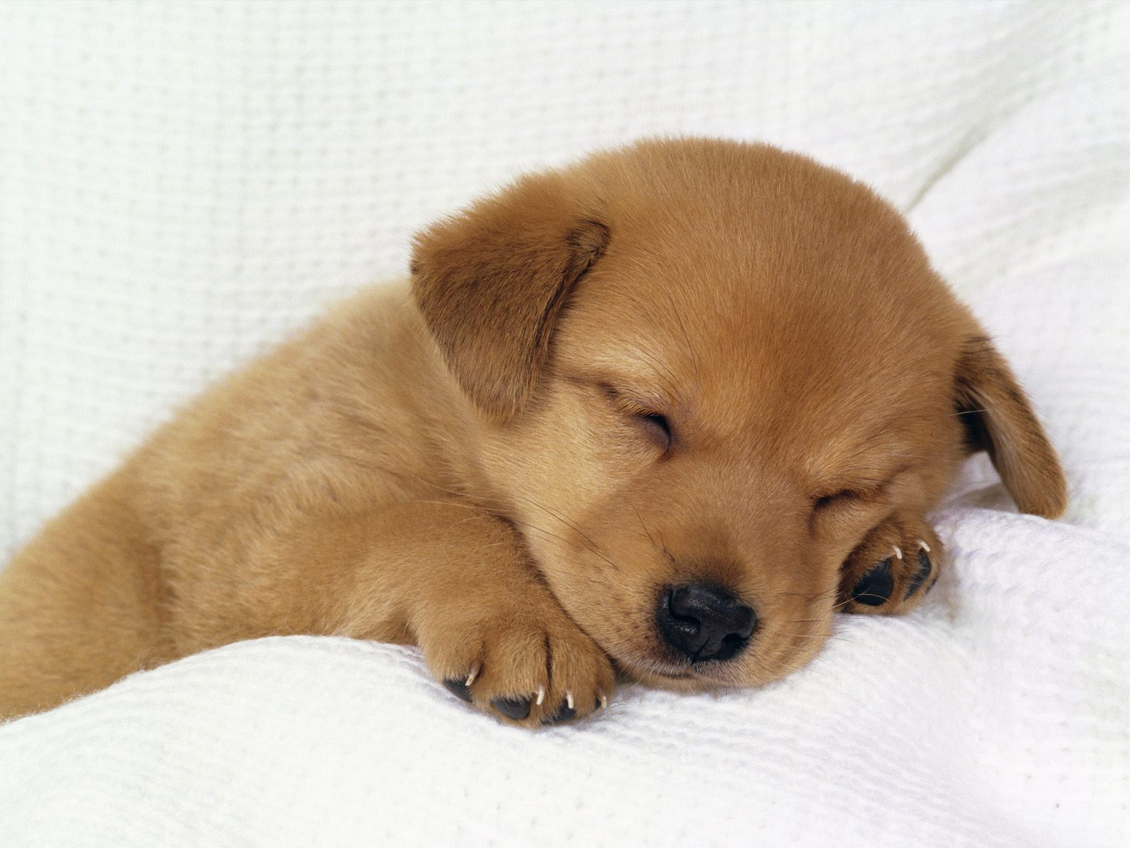 Dogs Wallpapers Download
